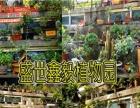 淘宝网盛世鑫毅植物园对节白蜡盆景