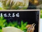 专养**海南潭牛文昌鸡(椰子鸡主材)