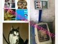 宠爱宠物托运中心 为您提供 诚信 便捷 安全.放心