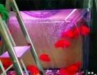 鱼缸清洗 鱼缸定制 鱼缸搬家 鱼缸维修 观赏鱼寄养