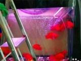 搬鱼缸 鱼缸清洗 鱼缸维修 鱼缸漏水 新鱼缸组装