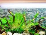 热带鱼专业鱼缸上门清理维护保养