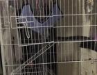 猫笼子猫别墅全新可拆卸