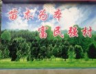 临清市万绿精品杨树苗//107杨树苗供应//扦插种条段出售