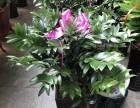 哈尔滨江北绿植花卉批发价格质量最好