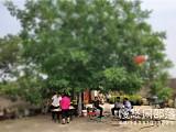 北京老人退休后的生活