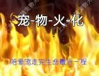 上海松江宠物火化九亭镇宠物殡葬小狗小猫遗体火葬服务免费接送