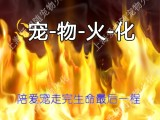 上海虹口區寵物殯葬地址江灣鎮寵物火化電話免費上門接送