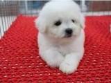 嘉兴哪里有宠物狗出售 嘉兴哪里可以领养小狗