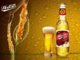 英豪玛咖啤酒招全国代理商