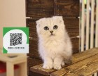 徐州哪里卖折耳猫 折耳猫价格 折耳猫哪里有卖