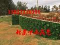 北京仿真绿植墙影视造景道具墙订做