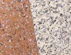 杭州厂家直销高层建筑外墙柔性板岩 轻薄柔性花岗岩大理石价格
