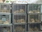 农场养殖药用刺猬大量出售