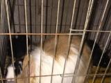 自家宠物兔,欢迎大家来看啊!