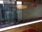深圳家庭鱼缸护理 风水缸维护 上门定做淡水缸 观赏鱼养殖