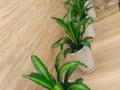 罗湖绿植批发、 室内绿植租赁、花卉批发、免费养护