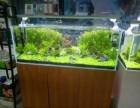 专业承接各种鱼缸清洗维护