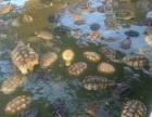 刺猬 龟 海狸鼠批发