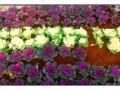 洛阳最便宜墓地--南山陵园单穴3180!