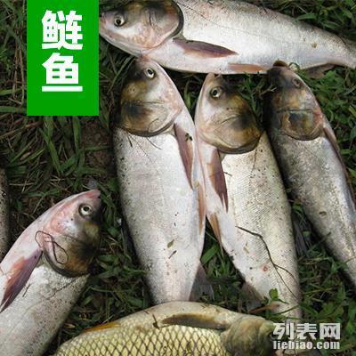 供应 出售 石家庄鱼苗 河北淡水鱼苗养殖场买卖价格