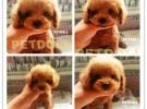 南京专业犬舍-纯种健康-终身售后