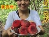 红菇的食用方法 ,怎么做好吃?