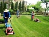绿化工程绿化养护植物租摆植物墙草坪假山鱼池