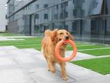 家庭伴侣犬 宠物犬行为纠正 政嘉训练家