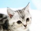 优优熊UnaBear_一物一拍一价格_福州本地猫