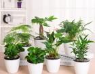 无锡 生日周年会议桌花鲜花速递鲜花礼盒绿植盆栽