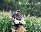 宠物训练工作犬护卫犬训练