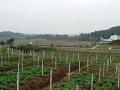 四川省巴中市400亩旱地出租