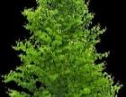 纯绿色疗法,梳通经络,调理人体酸性体质
