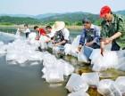 南美白对虾淡水养殖 农丰虾王引领行业高速发展