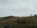 韶关始兴县1200亩缓坡山地出租,50亩起可分租。