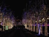 成都夢幻燈光節展覽出租 燈光節主題造型制作出租