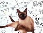 家庭 猫咪寄养 短期寄存