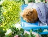 上海宠物火化,宠物殡葬,动物火葬,动物尸体善后处理