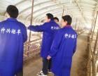 安徽争华羊业养殖湖羊养殖