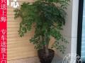 上海花木出租黄浦区花卉租摆绿植租摆租赁植物租摆