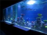 广州海洋生物鱼缸展览租赁人气旺-洋清水族