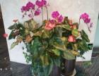 承接室内外绿化专业设计园林绿化工程花木花卉免费配送