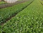 洪娜农庄令蔬菜配送