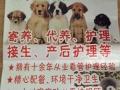 黑妈家庭宠物代养工作室宠物寄养价格面议