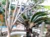 泸州-十五中对面楼顶花园2室1厅-600元