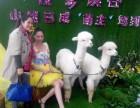 广州荔湾出租矮马有羊驼租赁