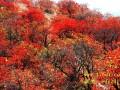 天堂寨景区赏枫叶的口碑怎么样