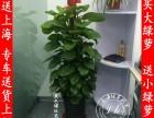 养护长宁区花卉植物租摆植物租赁养护室内
