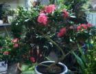 各种花卉鱼缸及鱼缸配件